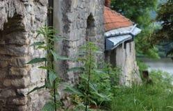 Stare kasztel ściany z kwitnącą pokrzywą w przodzie Zdjęcia Royalty Free