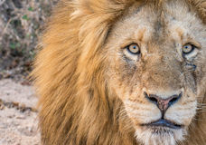 Free Stare Of A King Stock Photos - 52066323