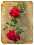 stare pocztówkowe róże royalty ilustracja