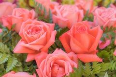 Stare różane róże na zielonym tle Zdjęcia Royalty Free