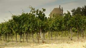 Stare religijne kopuły i winnicy, Languedoc Francja zbiory wideo