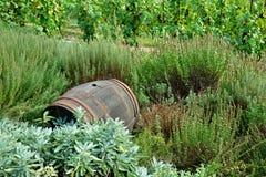 stare wino barrel Zdjęcie Stock