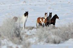 Staredown del caballo Fotos de archivo libres de regalías