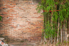 Starego †‹tła ceglana bambusowa ściana Zdjęcie Royalty Free