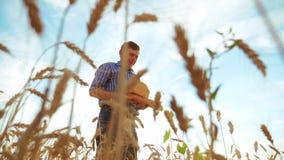 Starego średniorolnego mężczyzny piekarniana sylwetka trzyma złotego bochenek w dojrzałym pszenicznym polu i chleb przeciw niebie zbiory wideo