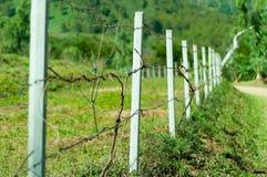 Starego barbeta druciany ogrodzenie z trawą Zdjęcia Royalty Free