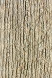 Starego drewna tekstury krakingowy tło. Obraz Royalty Free