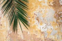 Starego krakingowego antykwarskiego rocznika historyczna tradycyjna ściana t i palma Fotografia Stock