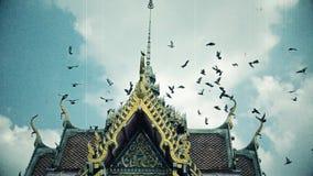 Starego materiału filmowego filmu adry retro kino kierdel gołębi ptaki lata w kierunku wierzchołka Tajlandzkiego buddhism świątyn zdjęcie wideo