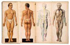 Starego rocznika anatomii męskie medyczne mapy Zdjęcia Stock