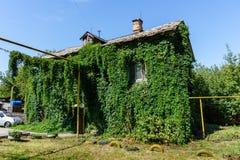 Starego rocznika drewniany dom w Samara, Rosja, przerastający z bluszczem, zakrywającym z zieloną rośliną obrazy stock