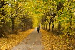 Starej kobiety wolno spacer daleko od przez lipowej alei, jesień, fal Obrazy Royalty Free