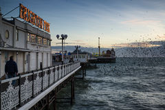 Staremurmuration över den Brighton pir under vintersolnedgång. Arkivbild