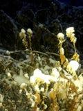 Starfightedbloemen in de sneeuw in de binnenplaats in de winter royalty-vrije stock foto's