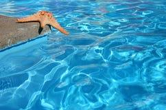 starfish бассеина стоковое фото rf