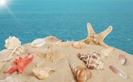 Starfish и seashells на песчаном пляже Стоковое Фото