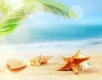 Starfish и seashells на песчаном пляже лето seashells песка рамки принципиальной схемы предпосылки Стоковые Изображения