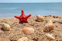 starfish красного цвета пляжа Стоковые Изображения