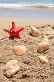 starfish красного цвета пляжа Стоковые Фото