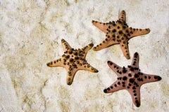 Starfish на песчаном пляже Стоковое Изображение RF