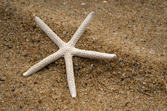 Starfish на пляже Стоковая Фотография RF
