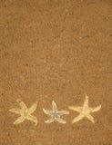 starfish песка предпосылки коричневые Стоковое Изображение RF