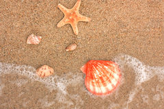 starfish песка cockleshells Стоковое Фото