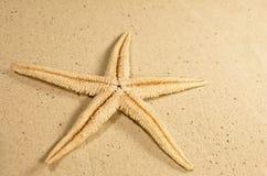 starfish пляжа песочные Стоковые Изображения RF