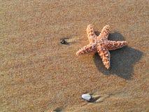 starfish пляжа песочные Стоковое Изображение