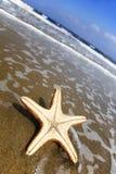 starfish пляжа Стоковое Фото