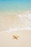 starfish пляжа стоковые фотографии rf