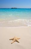 starfish пляжа Стоковые Изображения RF