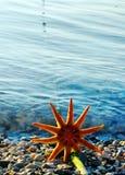 starfish пляжа Стоковое Изображение RF