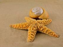 starfish пляжа Стоковые Изображения