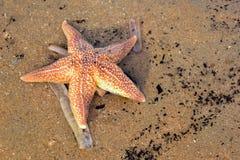 starfish пляжа песочные Стоковое фото RF