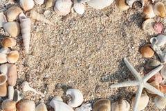 starfish раковины рамки Стоковые Изображения RF