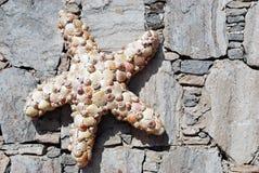 starfish раковины Стоковые Изображения