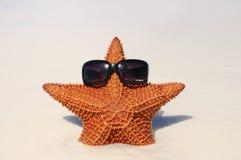 starfish солнечные Стоковая Фотография RF