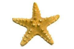starfish сувенира моря Стоковые Изображения