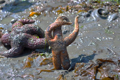 starfish танцы стоковые изображения