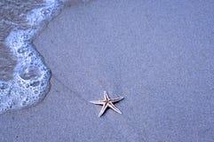 Starfish Foto de Stock