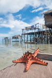 Starfish. Sits on sand in-front of sea gypsies makeshift Royalty Free Stock Image