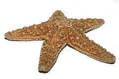 Starfish. Macro of a starfish Stock Images