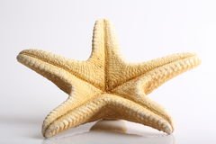 Starfish. The bottom of a starfish on a white background Stock Image