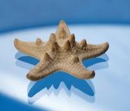 starfish Стоковые Изображения