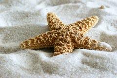 Starfish imagem de stock