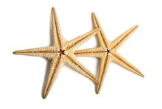 Starfish. Isolated on white background Royalty Free Stock Photos
