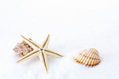Starfish. With a shell isolated on white background Royalty Free Stock Photography