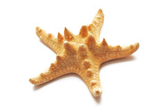 Starfish fotos de stock