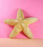 Starfish. On pink background, abstract royalty free stock photos